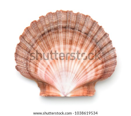 Top view of scallops shell isolated on white Royalty-Free Stock Photo #1038619534
