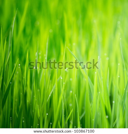 Green wet grass with dew on a blades. Shallow DOF #103867100