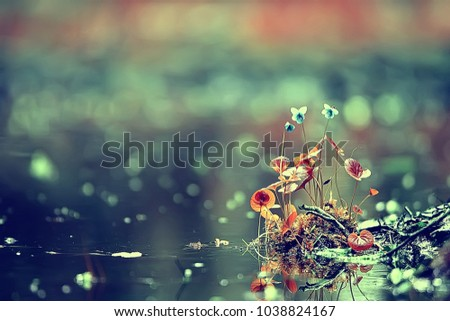 summer background flowers nature / beautiful picture design background flowers in the field