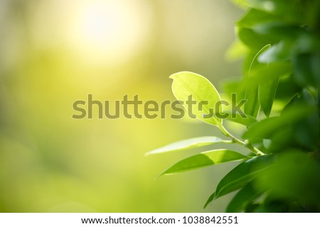 Closeup nature view of green leaf on blurred greenery background in garden with copy space using as background natural green plants landscape, ecology, fresh wallpaper concept. #1038842551