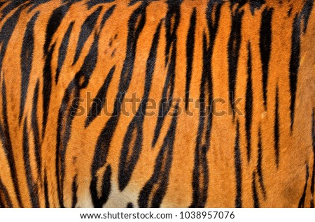 Real Skin Texture of Tiger