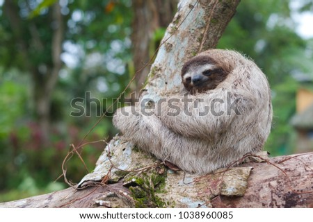 Baby sloth sitting on a stem looking into the camera.