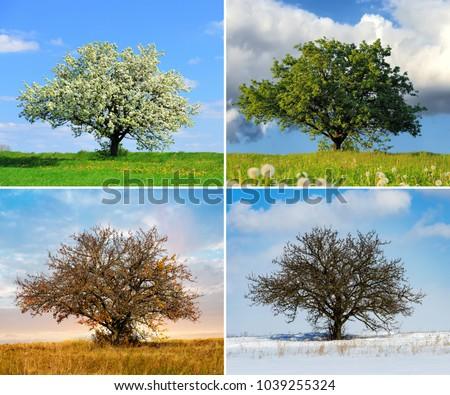 Alone big tree in four seasons #1039255324