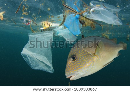 Fish and plastic pollution. Envrionmental problem - plastics contaminate seafood Royalty-Free Stock Photo #1039303867