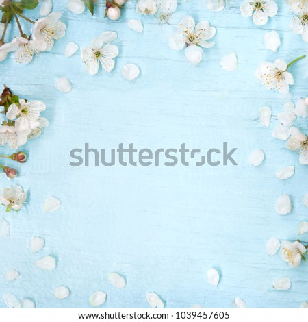 Beautiful Spring Nature background with Cherry tree flowers. Arrangement of White Sakura bloom on light blue Wood background. Soft Floral Frame. Square Web banner With Copy Space