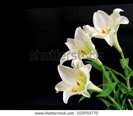 white lily flowers bouquet on black background with place for your text #103950770