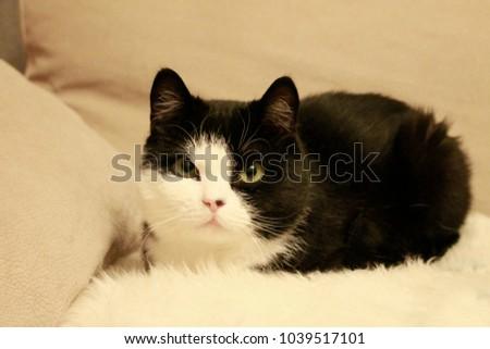 Cat, black and white #1039517101