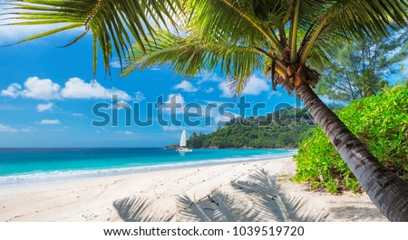 Beautiful sandy beach with palm and a sailing boat in the turquoise sea on Jamaica Paradise island. #1039519720