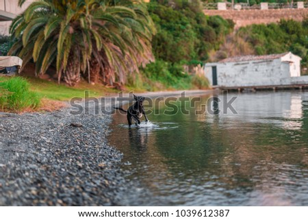 Photograph of a dog running on a small beach in menorca #1039612387