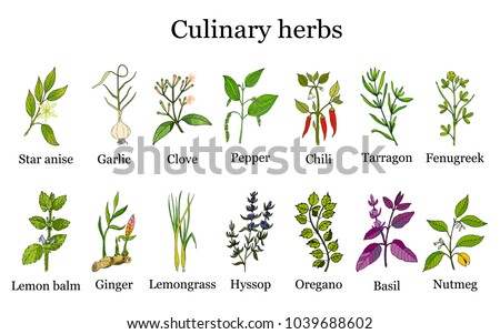 Hand drawn set of culinary herbs and spices. Vector illustration. #1039688602