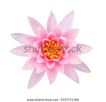 Light pink color lotus flower top view isolated on white background, clipping path included