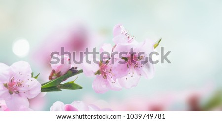 Pink cherry blossom twig close up over blue bokeh background banner #1039749781