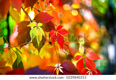 Autumn leaves background #1039840315