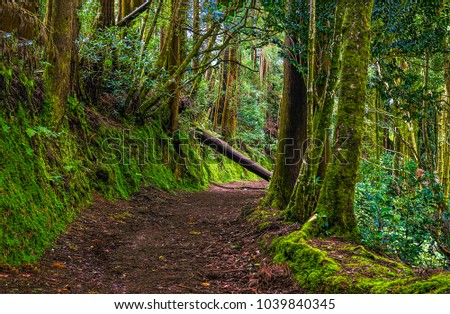 Deep green forest trail landscape #1039840345