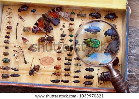 Collecting insects on pins and magnifying glass. Amateur or homemade insect  entomologist collection. search and study wild nature. close up Royalty-Free Stock Photo #1039970821