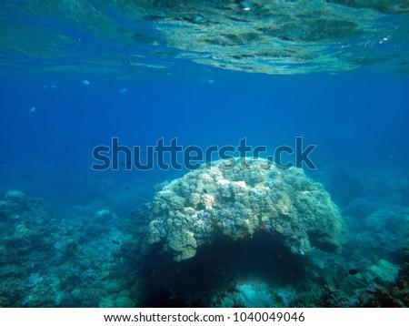 Sealife of Tranquility Island, Efate, Vanuatu                  #1040049046