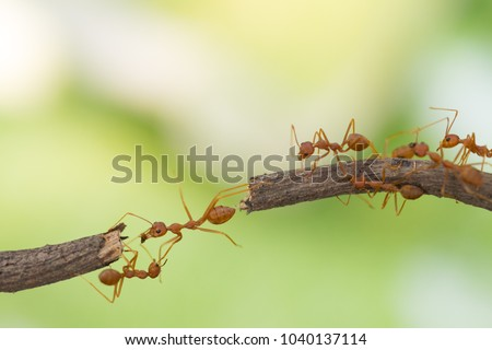 Ant action standing.Ant bridge unity team,Concept team work together Royalty-Free Stock Photo #1040137114