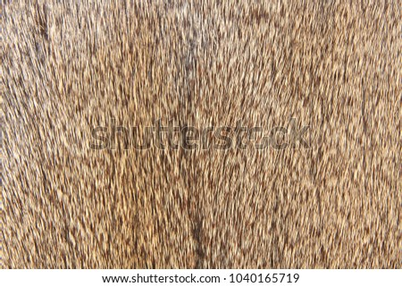 Close up of deer hair suitable for background #1040165719
