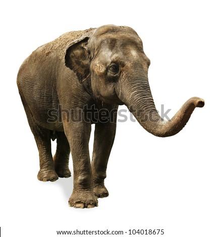 Indian Elephant Royalty-Free Stock Photo #104018675