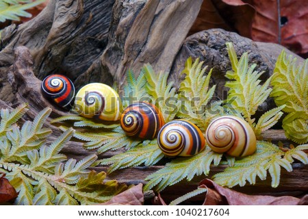 Snails : Cuban land snail (Polymita picta) or Painted snail, World's most colorful land snail from Cuba. Endangered and protected species. Selective focus. Royalty-Free Stock Photo #1040217604