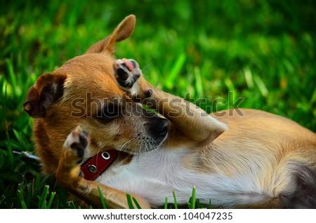 Dog #104047235