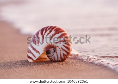seashell nautilus on sea beach under sunset sun light, Canary island, Spain Royalty-Free Stock Photo #1040592361