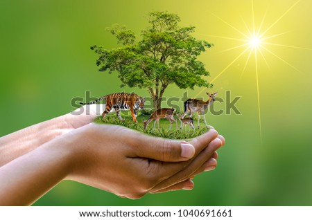 Earth Day Concept Nature reserve conserve Wildlife reserve tiger Deer Global warming Loaf Ecology Human hands protecting the wild and wild animals tigers deer, trees in the hands green background Sun  #1040691661