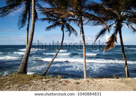 East Coast beach in Barbados