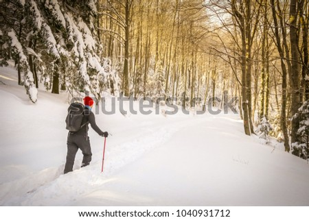 Hiker walking in the forest on the hill covered with fresh deep snow. #1040931712