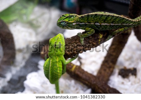 2 Lizards Green Standing #1041382330