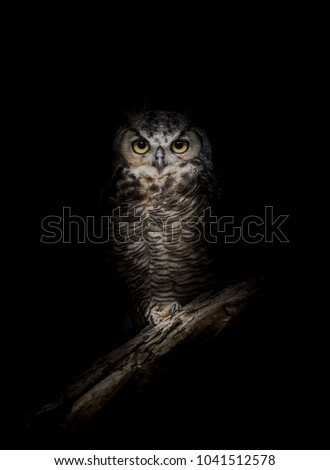 Wise Owl in the Night