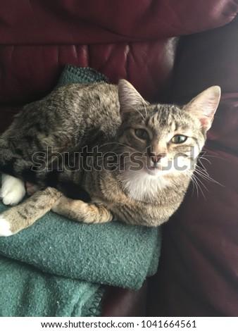 Tabby sleeping in the sun #1041664561