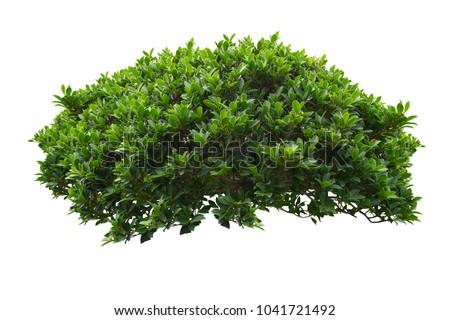 green bush isolated on white background. Royalty-Free Stock Photo #1041721492