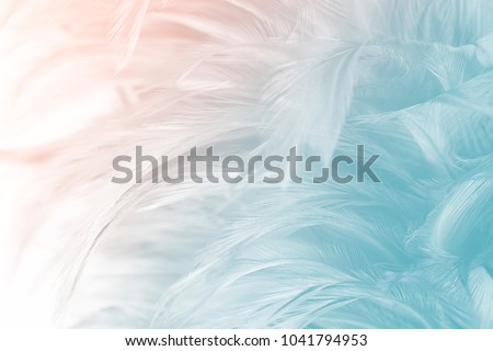 Beautiful green turquoise vintage color trends feather texture background with orange light