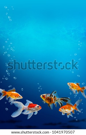 Group of aquarium fish swimming in clear blue water, collection of multi colored carassius auratus in fish tank, beautiful underwater background with goldfish, air bubbles and copy space