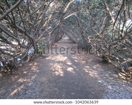 Tunnel from the branches in the park #1042063639