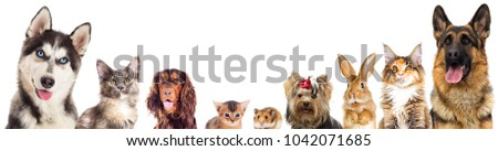 group of animals looking looking on a white background isolated Royalty-Free Stock Photo #1042071685