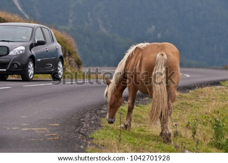 Horse grazing next to the road at Col d'Aubisque, a mountain pass in the Pyrenees, France.