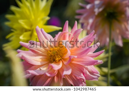 close up of wild flower with copy space #1042987465