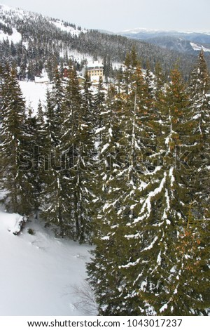 coniferous forest in the mountains near the resort village in winter #1043017237
