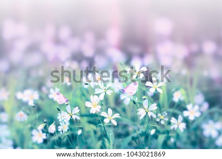 Small white flowers and butterflies on a gentle soft background outdoors close-up macro . Spring summer border template floral background. Light air delicate artistic image, free space.