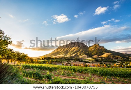 Wine region near Stellenbosch looking at Simonsberg in South Africa Royalty-Free Stock Photo #1043078755