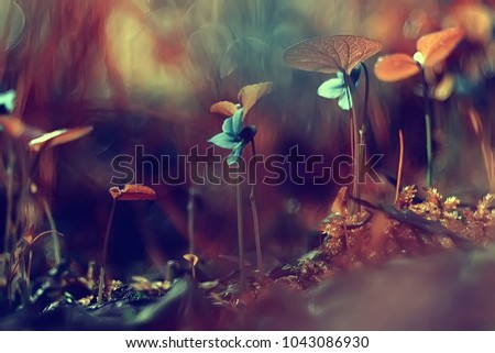 nature beauty flowers / background flowers vintage toning, beautiful nature photo macro