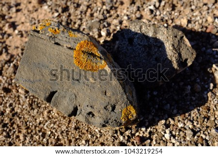 Lichen on volcanic rock. Natural background. #1043219254