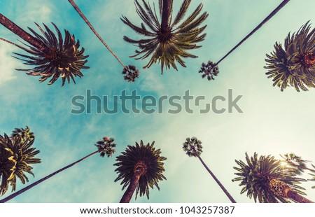 Los Angeles palm trees, low angle shot. Vintage tone #1043257387