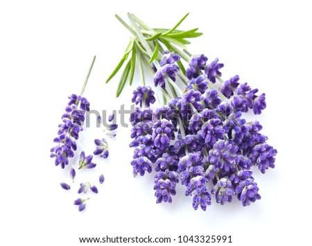 Lavender flowers on white background #1043325991