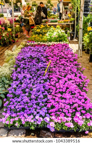 OSLO, NORWAY - JUNE 20, 2017:Flower market in Oslo, the capital of Norway #1043389516