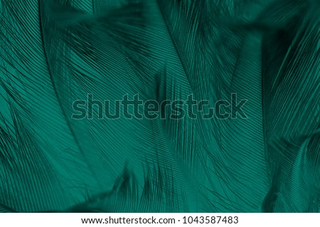 Beautiful dark green vintage color trends feather texture background #1043587483