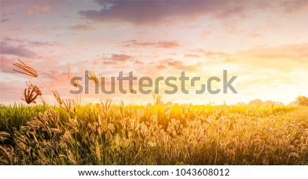 Field and sky in golden hours.