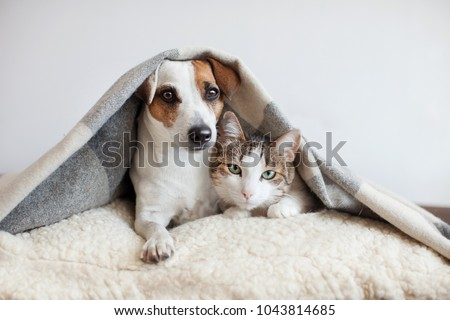 Dog and cat together. Dog hugs a cat under the rug at home. Friendship of pets #1043814685